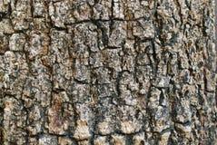 tła barkentyny tekstura Zdjęcia Royalty Free