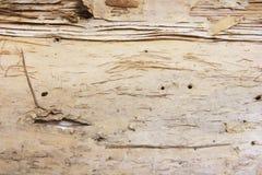 tła barkentyny tekstury drzewo Obraz Royalty Free