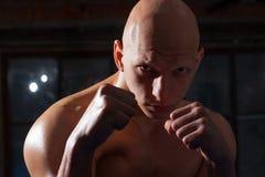 tła boksera odosobniony portreta biel Fotografia Stock