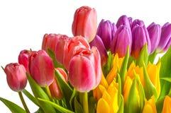 tła bukieta dekoracyjna ilustracyjna wiosna Obrazy Stock