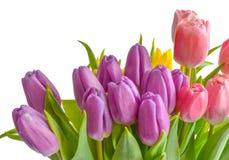 tła bukieta dekoracyjna ilustracyjna wiosna Zdjęcia Royalty Free