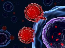 T cells attacking human cells with CRISPR-Cas9 system Stock Photography