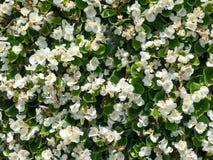 tła chryzantemy chabrowy dalii stokrotki kwiat kwitnie gerber nagietka osteospermum wyboru ustalonego strawflower biel Obrazy Stock