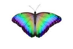 tęcza motyli ilustracyjny wektor Obraz Stock