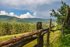 Tęcza nad lasem Zdjęcie Stock