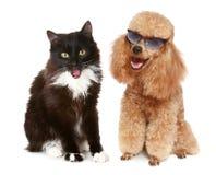 tła czarny kota psa pudla biel Obrazy Stock