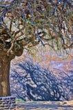 Tęczy drzewo Fotografia Stock
