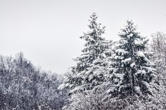 For?t d'hiver couverte dans la neige image stock