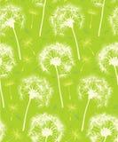tła dandelion wzoru donosicielka Obrazy Stock