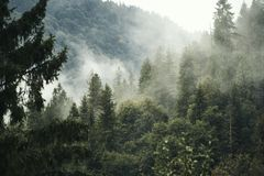 For?t dans le brouillard photos stock
