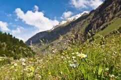 Été dans les montagnes Photos stock
