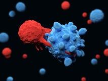 T de cel valt een kankercel aan Stock Foto