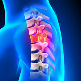 T4 Disc - Thoracic Spine Anatomy Stock Image