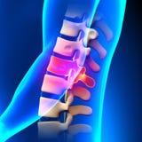 T12 Diskette - Brust- Dorn-Anatomie stock abbildung
