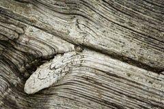 tła drewniany stary Obraz Stock