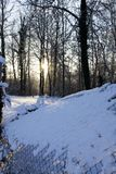 For?t en hiver photos libres de droits