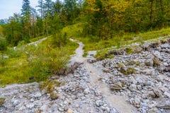 For?t en montagnes d'Alpes pr?s de Koenigssee, Konigsee, parc national de Berchtesgaden, Bavi?re, Allemagne image libre de droits