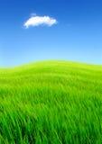 tła eniroment pola ilustraci krajobrazu lato wektor Zdjęcie Royalty Free