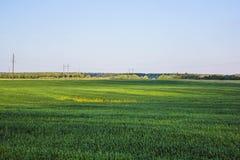 tła eniroment pola ilustraci krajobrazu lato wektor Fotografia Royalty Free