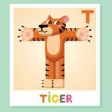 T est pour le tigre Lettre T Tigre, illustration mignonne blanc animal de vecteur de fonds d'image d'alphabet Photo libre de droits