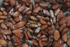 tła fasoli cacao ciemny ilustracyjny biel Obrazy Stock
