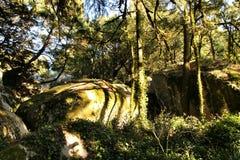 For?t feuillue avec des formations de roche colossales et arbres en montagnes de Sintra photos stock
