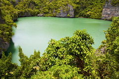 T of a green lagoon and water Stock Photography