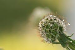 tła guzika herbage Zdjęcia Royalty Free