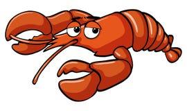 tła homara czerwony biel Zdjęcie Stock