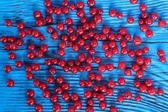 tła jagod porzeczkowe owoc odizolowywali biel Obrazy Stock