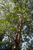 tła jezioro michigan nieba drzewo Obrazy Stock