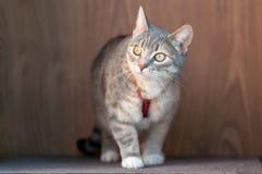 tła kota kolorowy portreta drewno Zdjęcia Stock