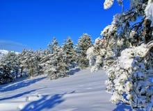 t krajobrazowa zima Obrazy Royalty Free