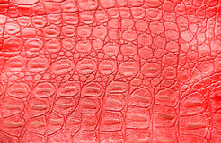 tła krokodyla skóra Obrazy Royalty Free