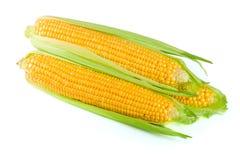 tła kukurydzanego ucho odosobniony biel Obrazy Stock