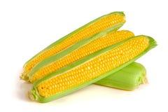 tła kukurydzanego ucho odosobniony biel Fotografia Royalty Free