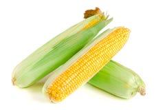 tła kukurydzanego ucho odosobniony biel Obrazy Royalty Free