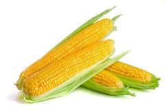 tła kukurydzanego ucho odosobniony biel Zdjęcia Stock