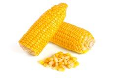 tła kukurydzanego ucho odosobniony biel Fotografia Stock