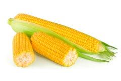 tła kukurydzanego ucho odosobniony biel Obraz Royalty Free