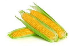 tła kukurydzanego ucho odosobniony biel Zdjęcie Stock