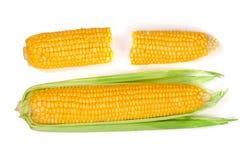 tła kukurydzanego ucho odosobniony biel Odgórny widok Zdjęcie Stock