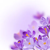 tła kwiatów ilustracyjny wiosna wektoru biel Fotografia Royalty Free