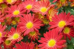 tła kwiatów tekstura Fotografia Stock