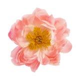 tła kwiatu peoni biel Zdjęcia Royalty Free