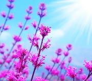tła kwiatu wiosna Obraz Stock