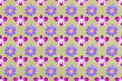 tła kwiatu wzór bezszwowy Zdjęcia Royalty Free