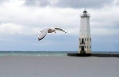 tła latarni morskiej seagull Zdjęcie Royalty Free