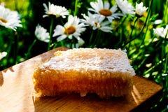 tła miodowy honeycombs obrazka biel Zdjęcia Stock