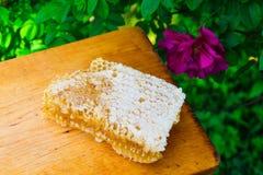 tła miodowy honeycombs obrazka biel Zdjęcia Royalty Free